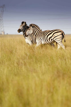 A variety of wildlife roam New Vaal colliery's biodiversity park